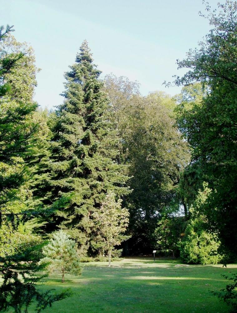 Bonesprit le jardin botanique de lucques for Bal des citrouilles jardin botanique